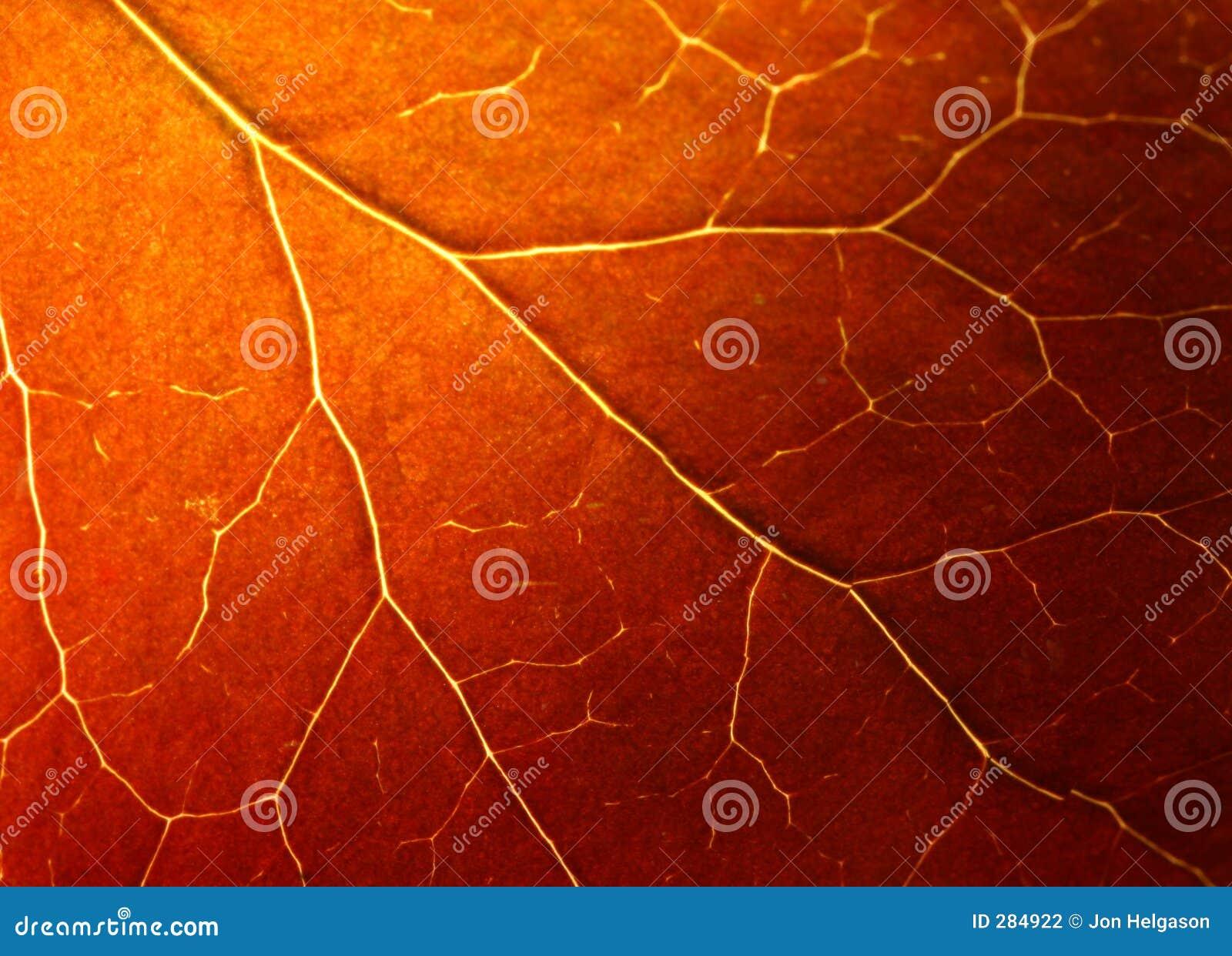 Extrem leafmakro för höst