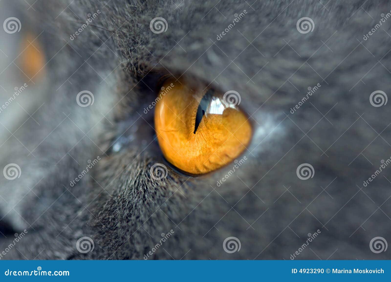 Extremadamente primer del ojo de gato