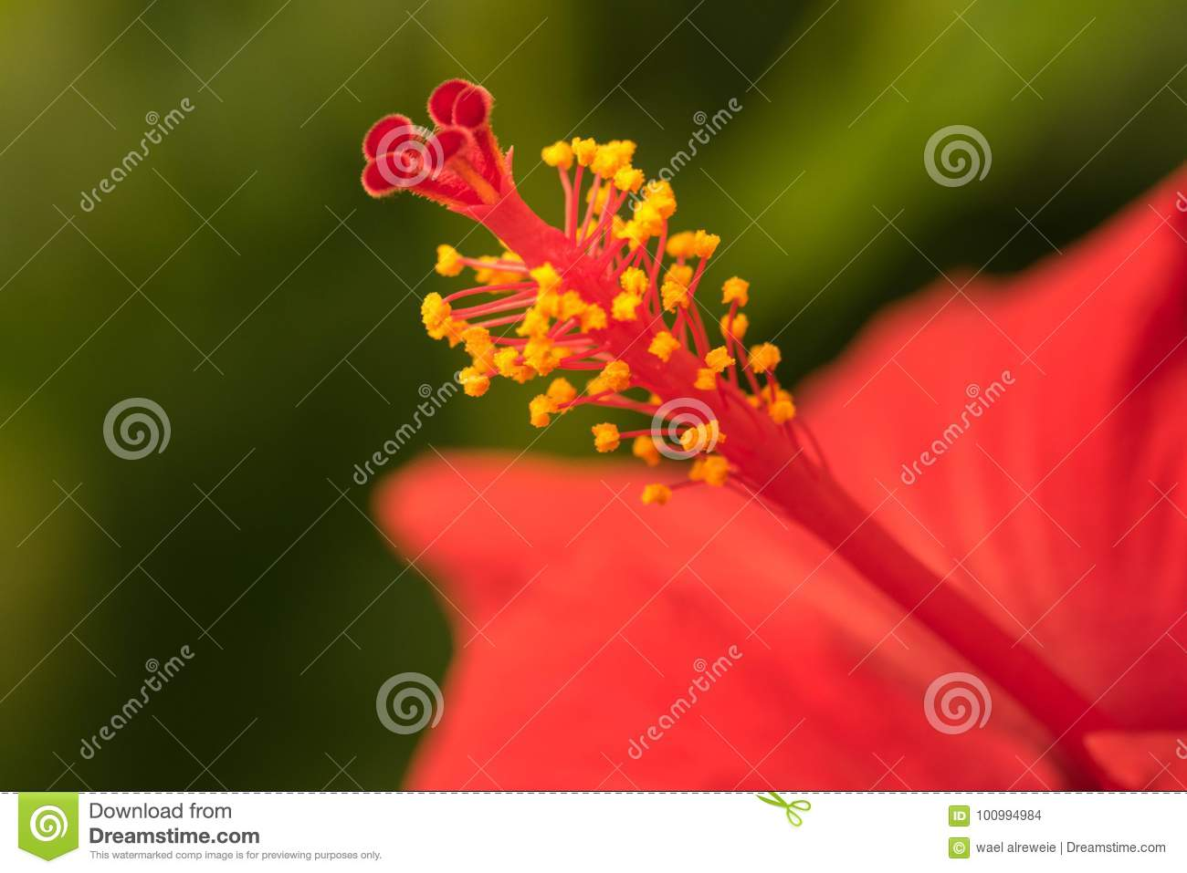 Extreme Close Up Of A Colourful Flower Stamen And Stigma Stock