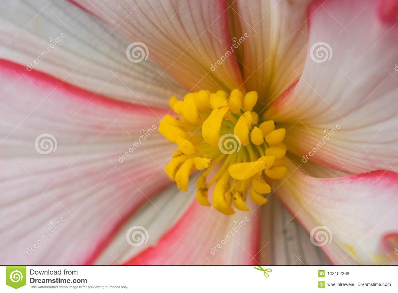 Extreme Close Up Of A Colourful Flower Stamen And Stigma. Stock ...