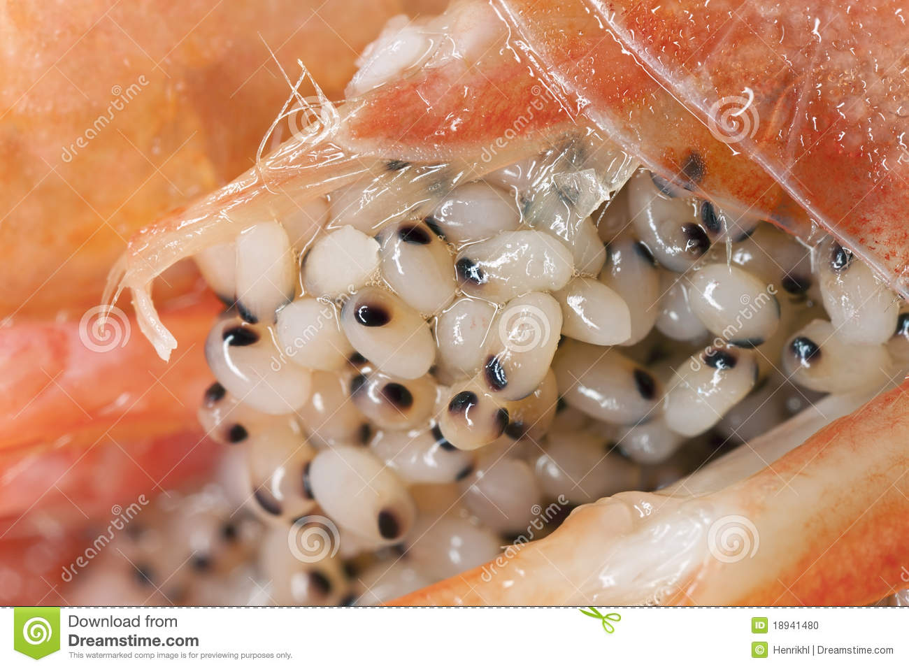 extreme close up of eggs on shrimp stock photo image. Black Bedroom Furniture Sets. Home Design Ideas