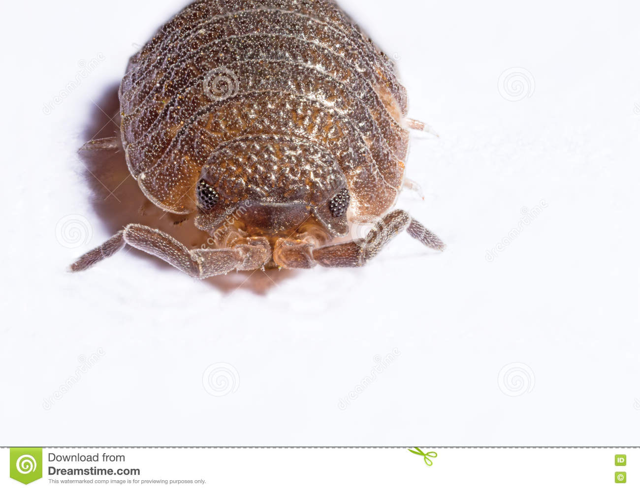 Extreme close up of a woodlouse