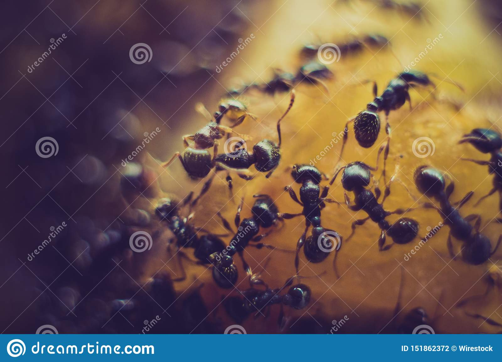 Extreme closeup of an ant colony on a bright orange surface
