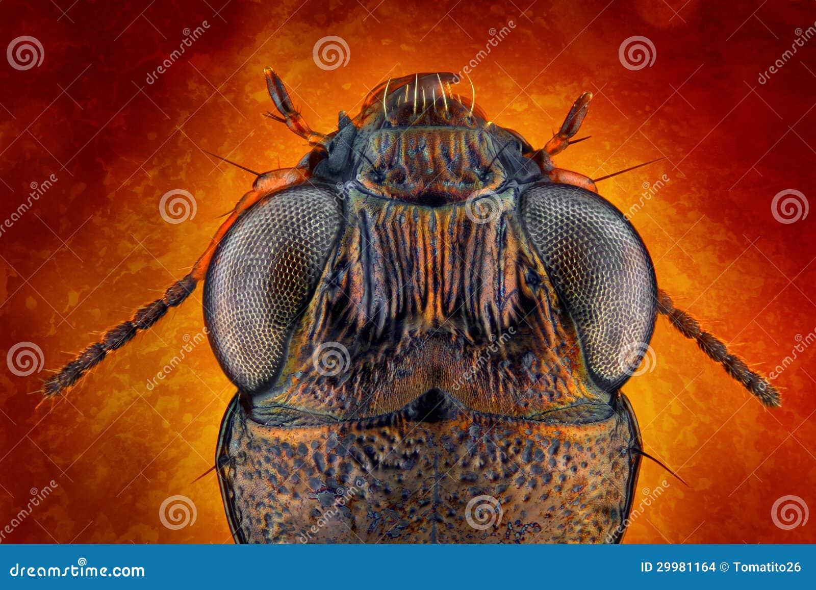 Ground beetle macro stock photo. Image of above ...