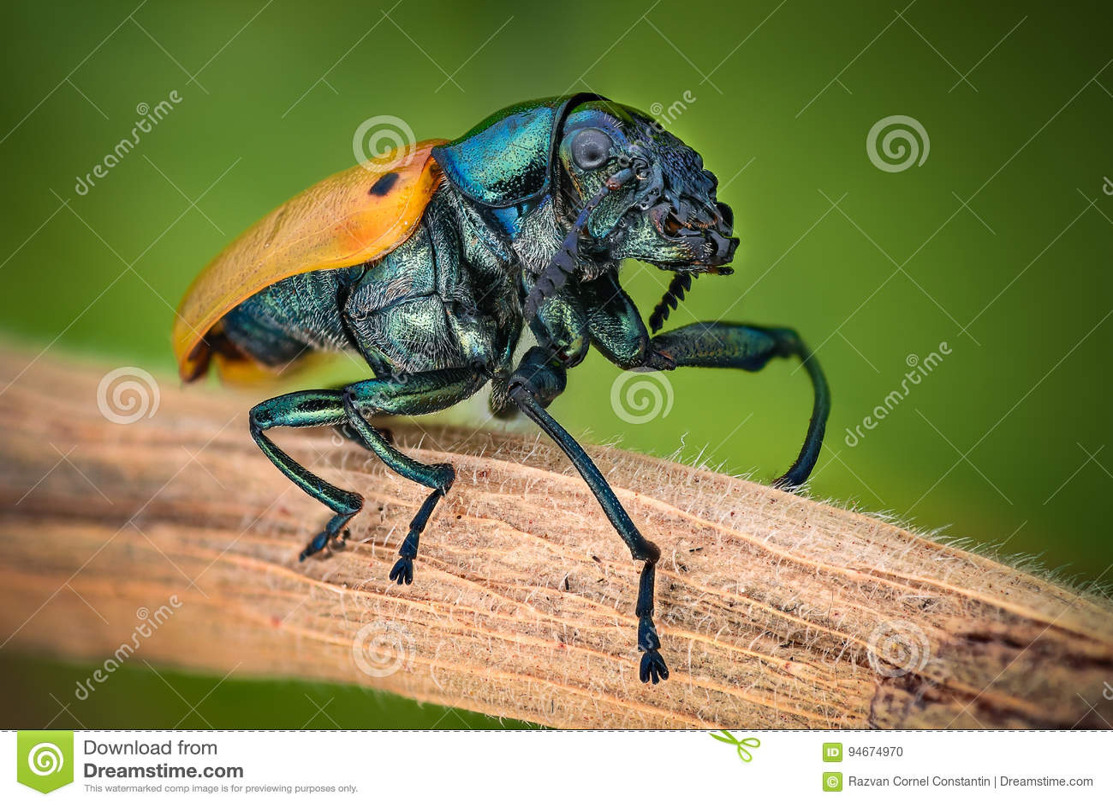Extreme magnification - Jewel Beetle
