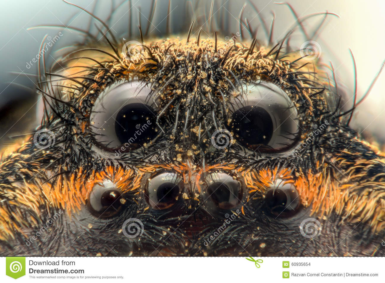 Extreme Magnification Wolf Spider Eyes Stock Photo