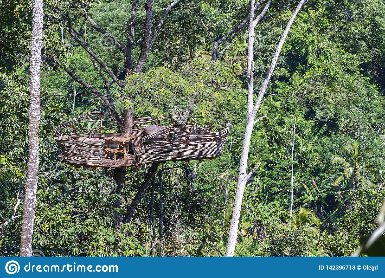 Extreme recreation area on a high tropical tree in the jungle near the rice terraces in island Bali, Indonesia