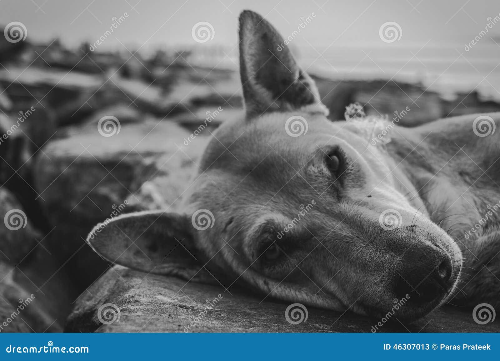 Extremt svartvitt skott av en hund
