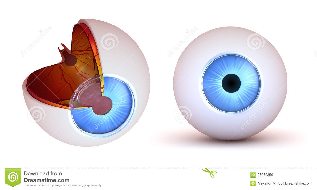 Eye anatomy - inner structure and front view