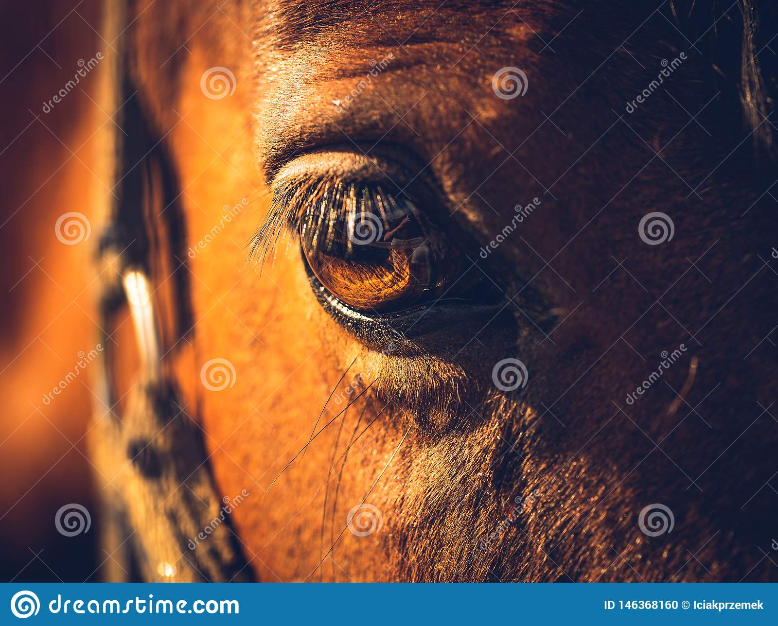 Eye Of A Brown Horse In Sun Stock Photo - Image of sight