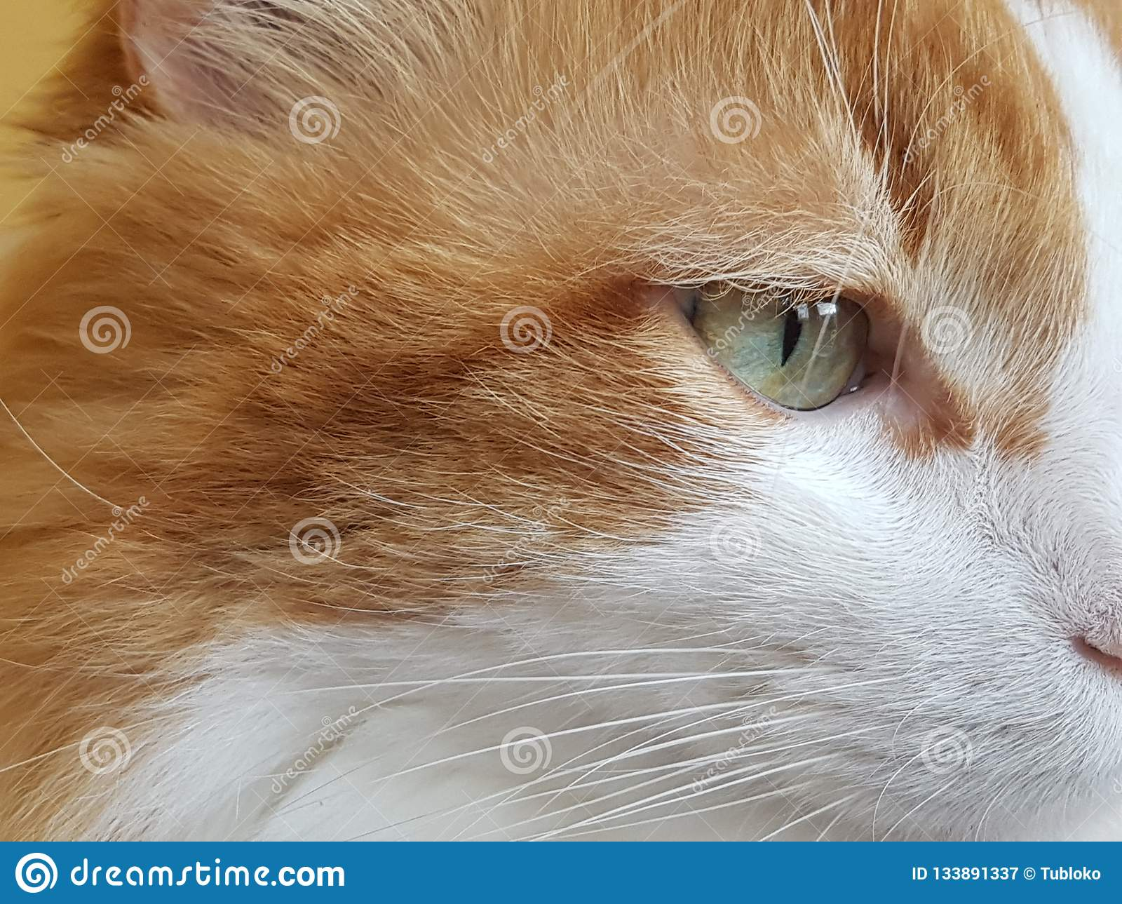 Cat Side View Stock Images Download 8 172 Royalty Free