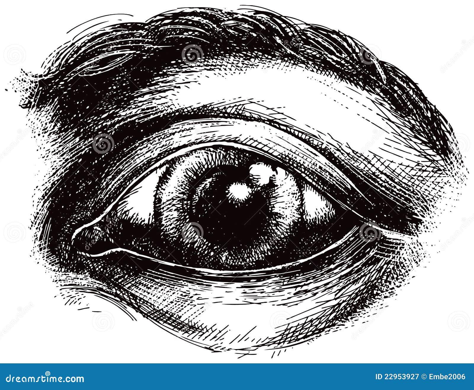 Eye Illustration Royal...