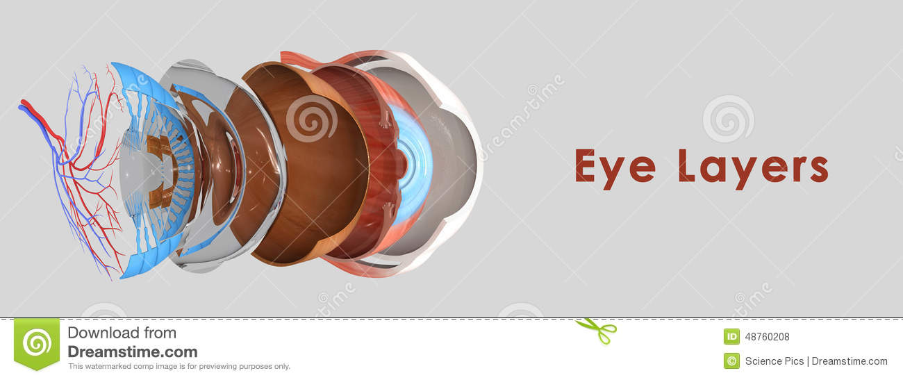 Eye Layers Composed Three Each Which Has One More Very Important Components on Eye Anatomy Diagram