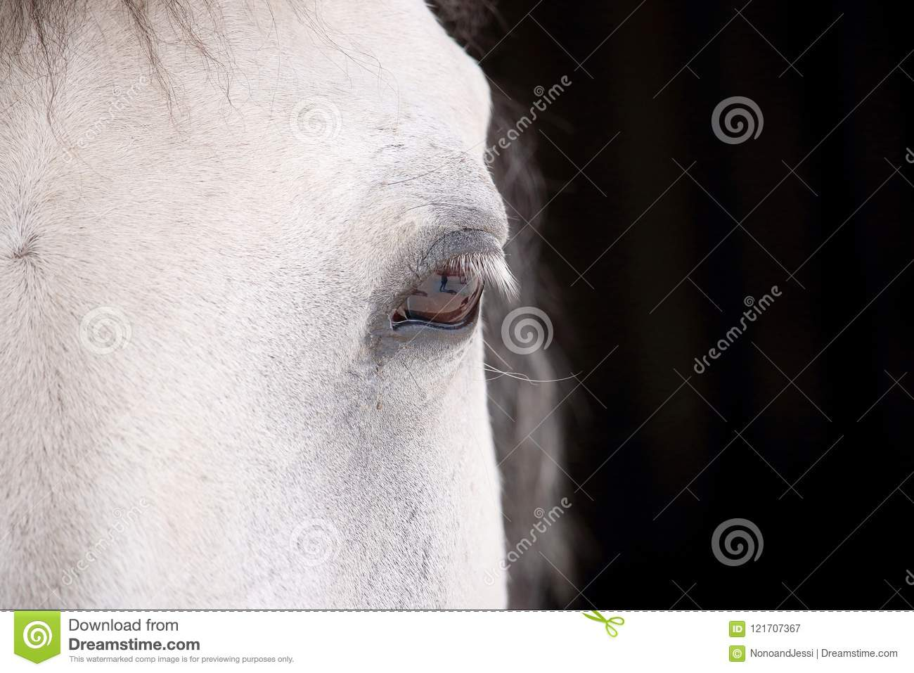 Eye of a spotted white horse looking at us in front of the stables