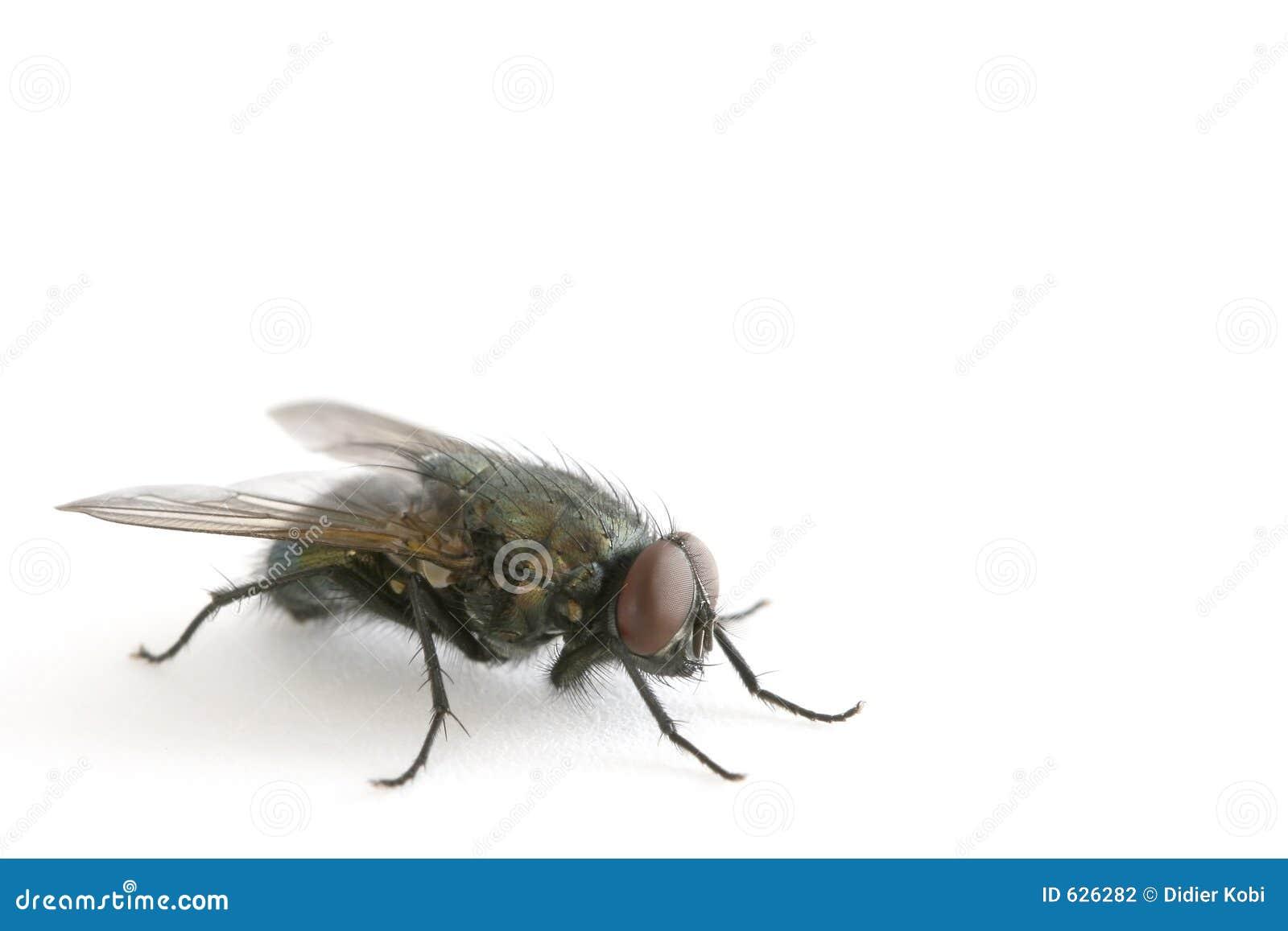 Download Eyed красный цвет мухы стоковое фото. изображение насчитывающей крыло - 626282