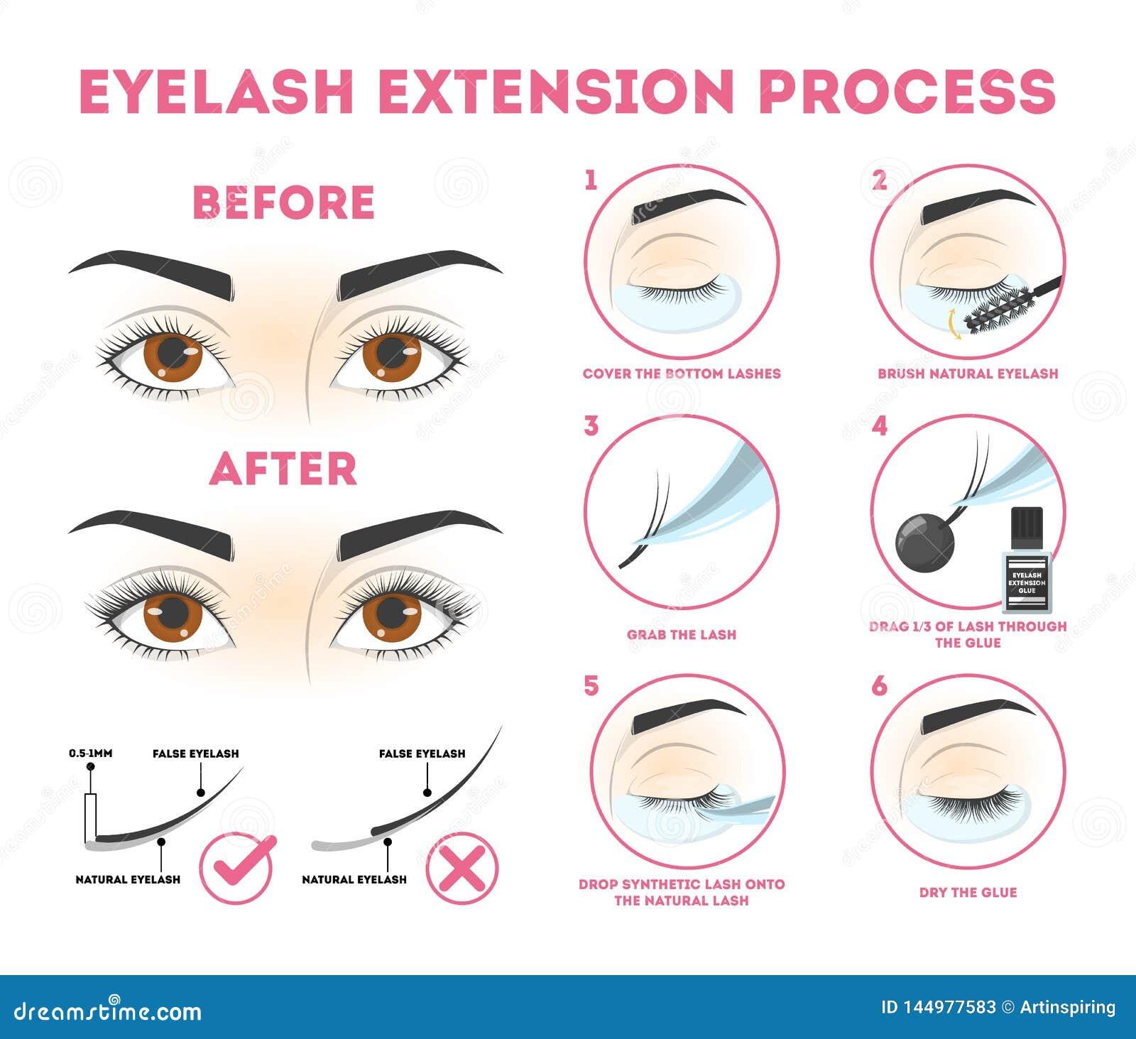 Οδηγός επέκτασης Eyelash για τη γυναίκα Infographic ?? ?? eyelashes