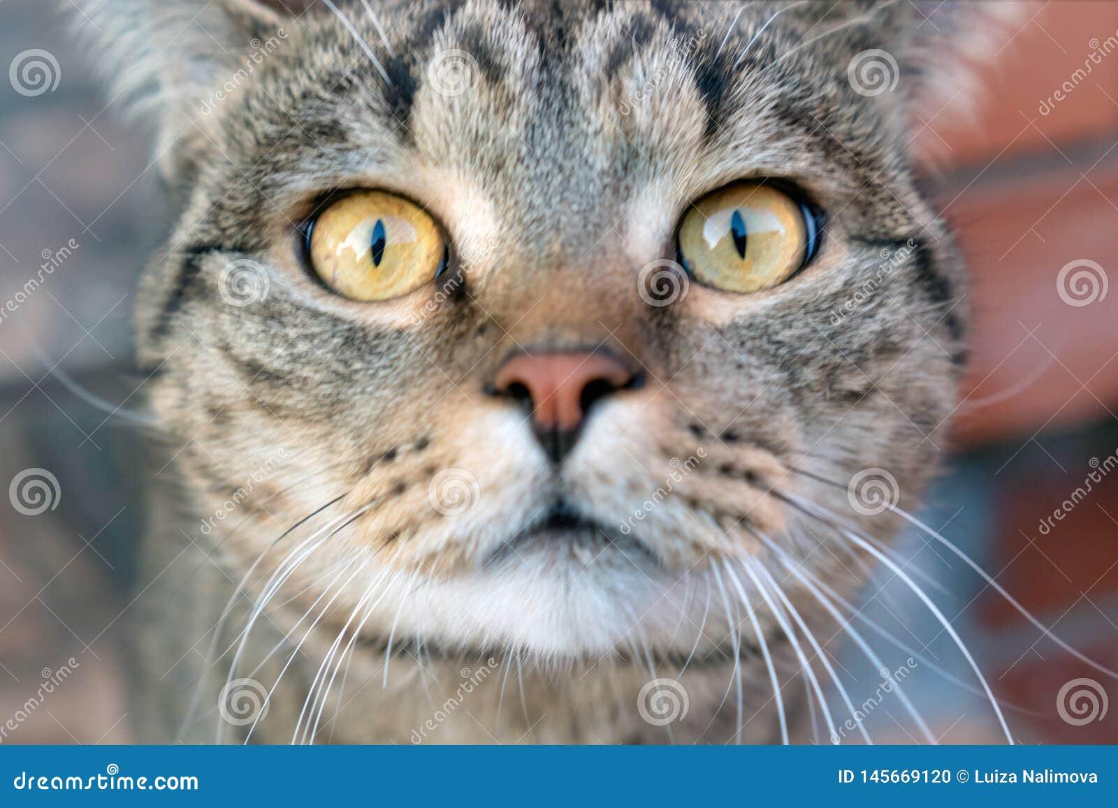 Eyes of a cat.
