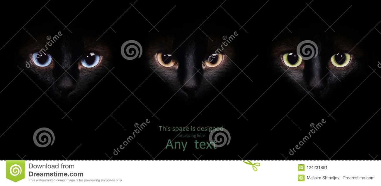 Eyes of the siamese cat in the darkness.