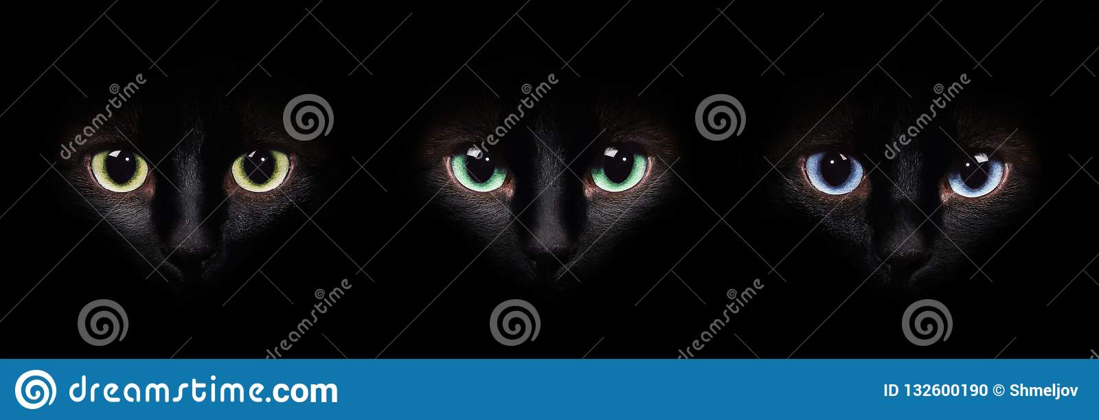 Eyes of the siamese cat in the darkness. Different eyes collage.