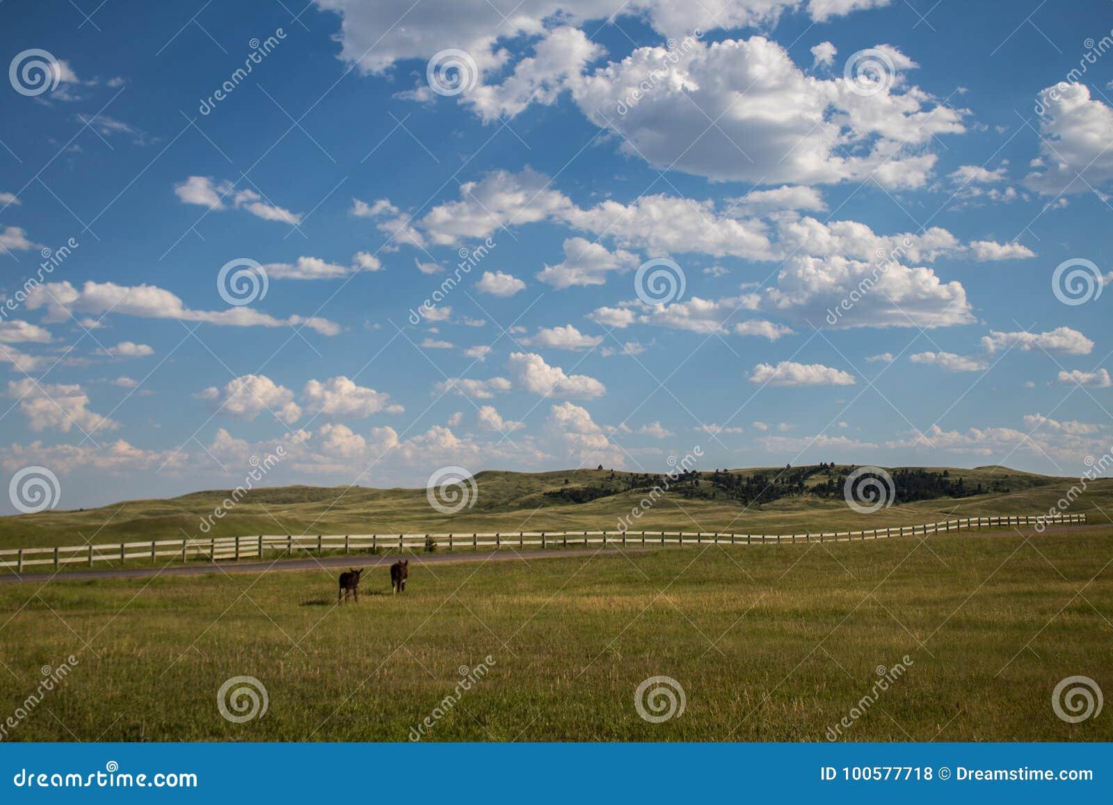 Ezels die aan Omheining in Custer State Park in Zuid-Dakota lopen