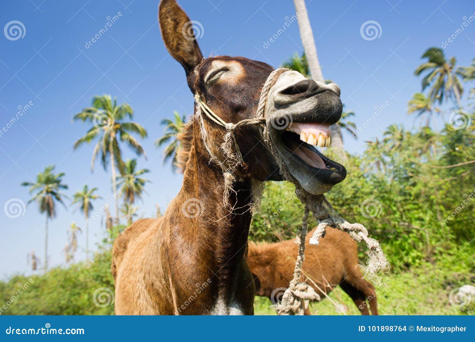 Extreem Ezels Grappige Dieren stock foto. Afbeelding bestaande uit dieren @DW96