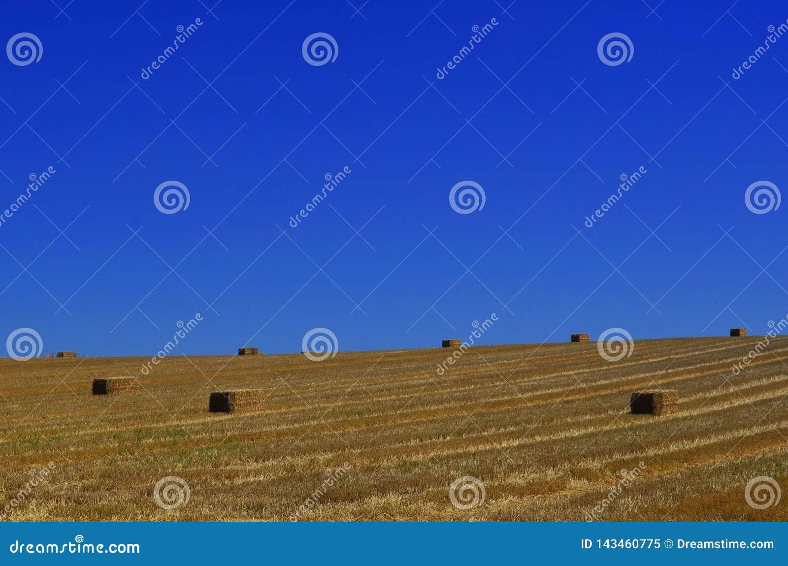 Fält av hö som tänds vid en solig sommardag