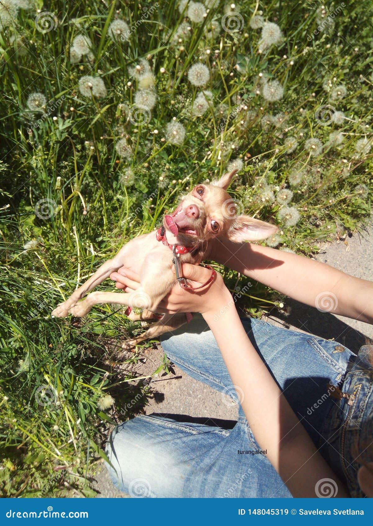 Fält för djur för leendehund lyckligt