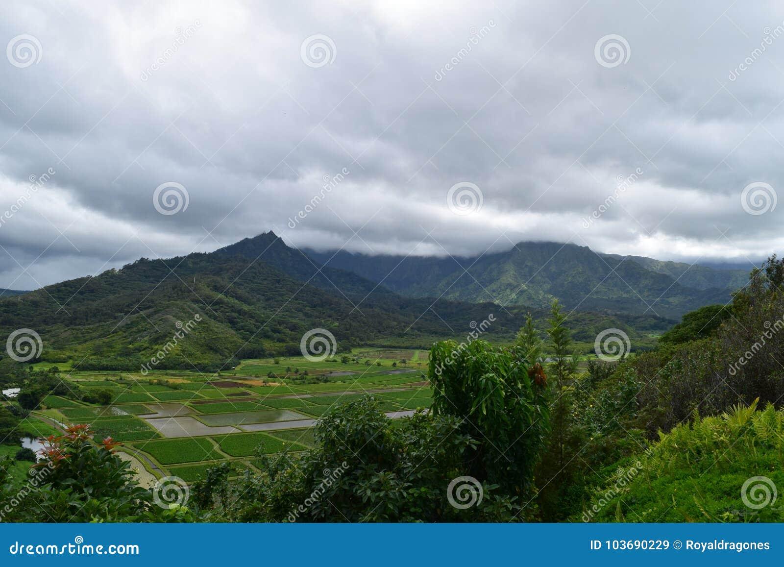 Fält för Hanalei dalTaro i Kauai Hawaii