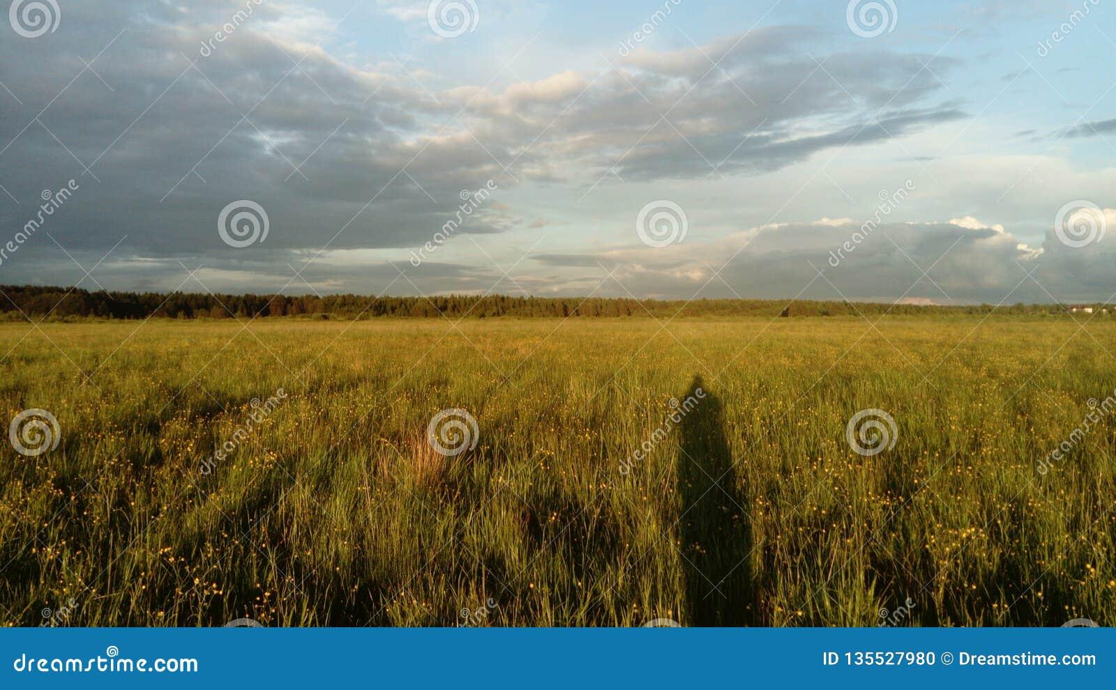 Fält, himmel, skog och skugga