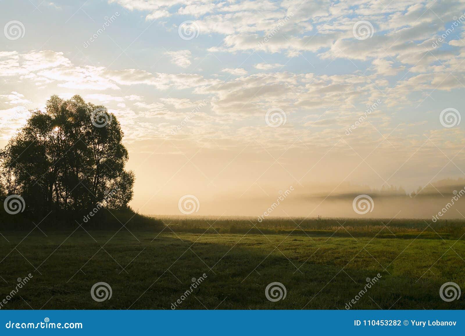 Fält kanten av skogen i ottan Dimma höst