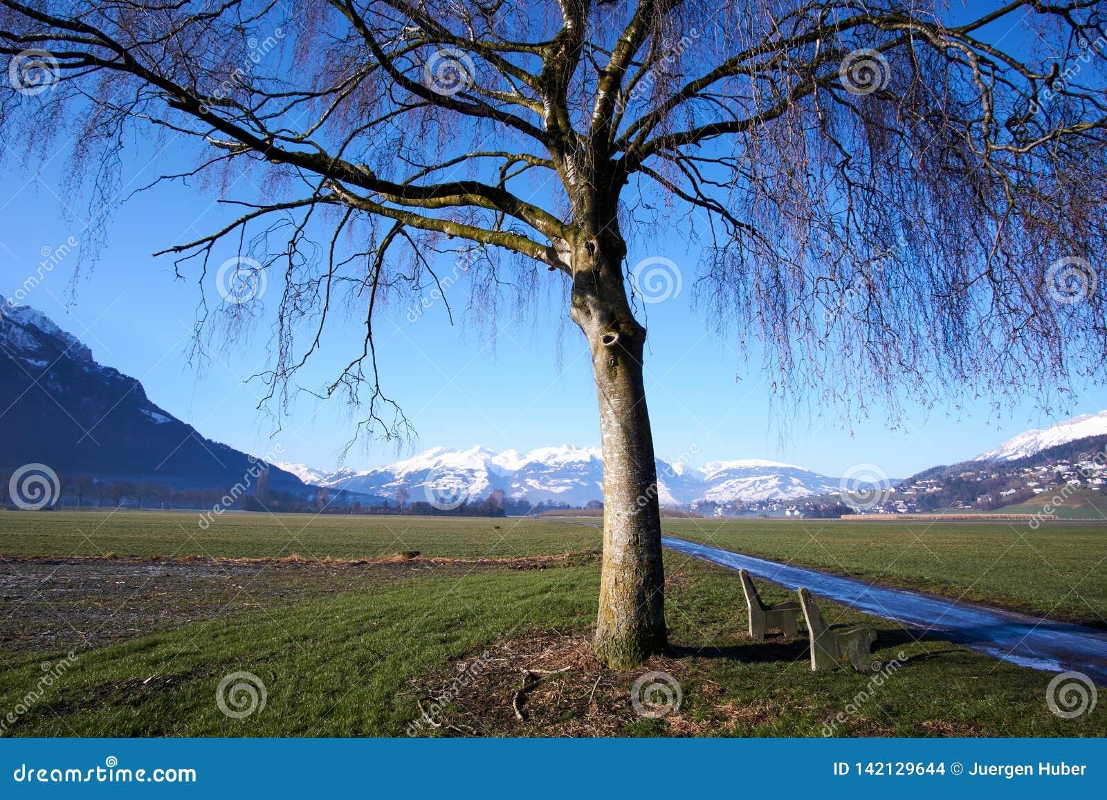 Fält med trädet och berg med snö