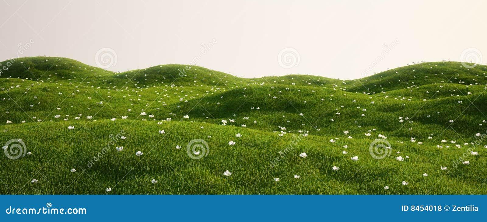 Fältblommor gräs white