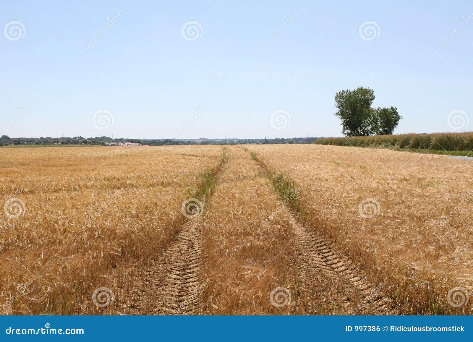 Fältet spåriner traktortrailorvete