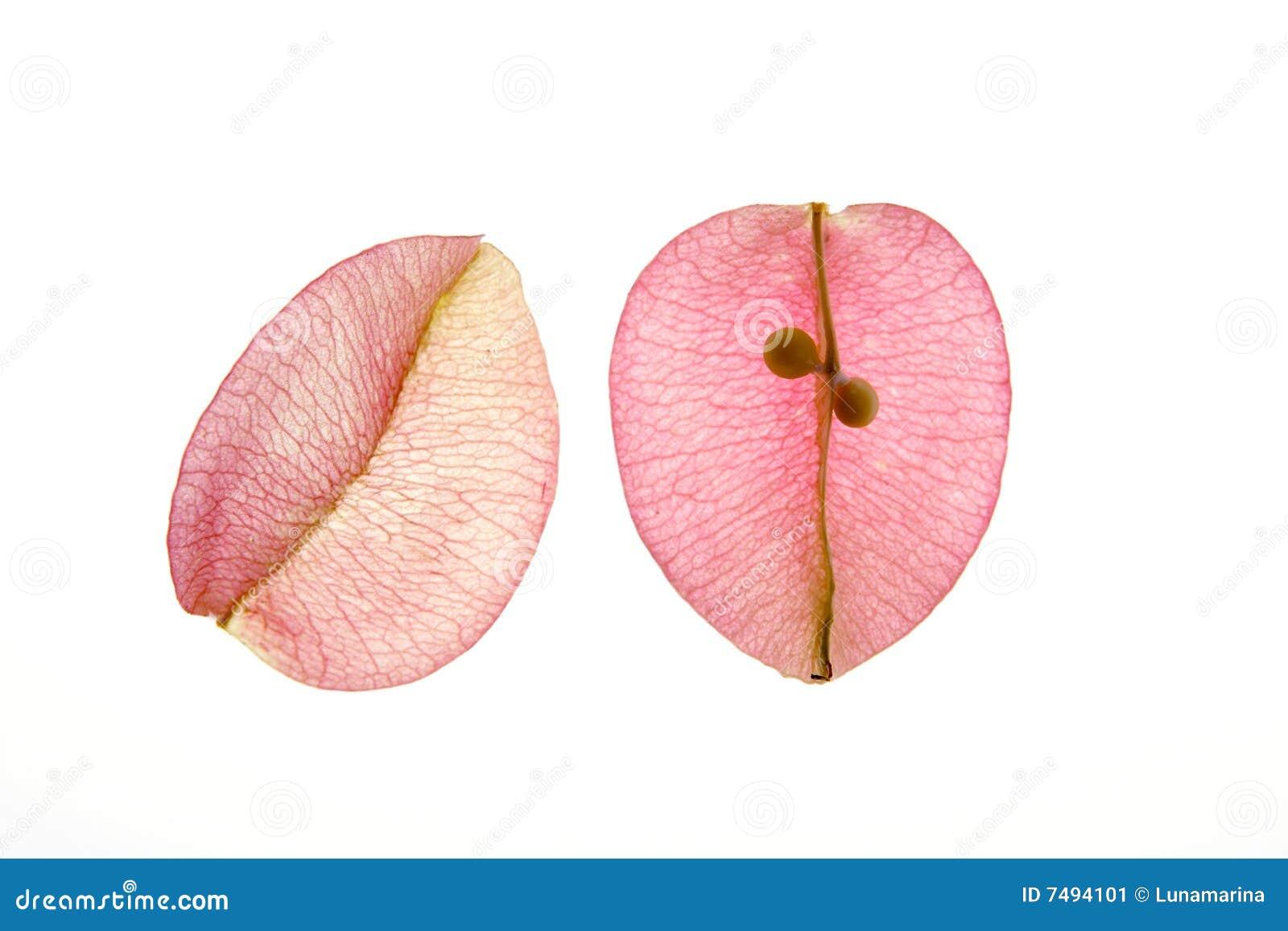 Färben Sie Blumen, Blätter, Blumenblätter, Trennte Weißrückseite ...