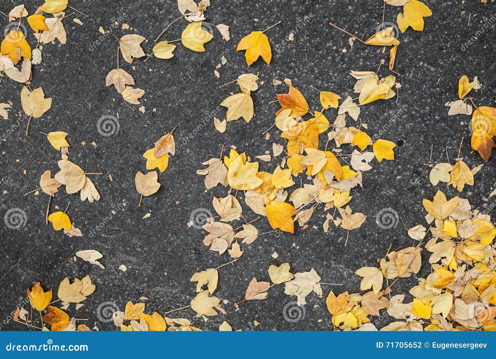 Färben Sie Die Gefallenen Herbstlichen Blätter Gelb, Die Auf ...