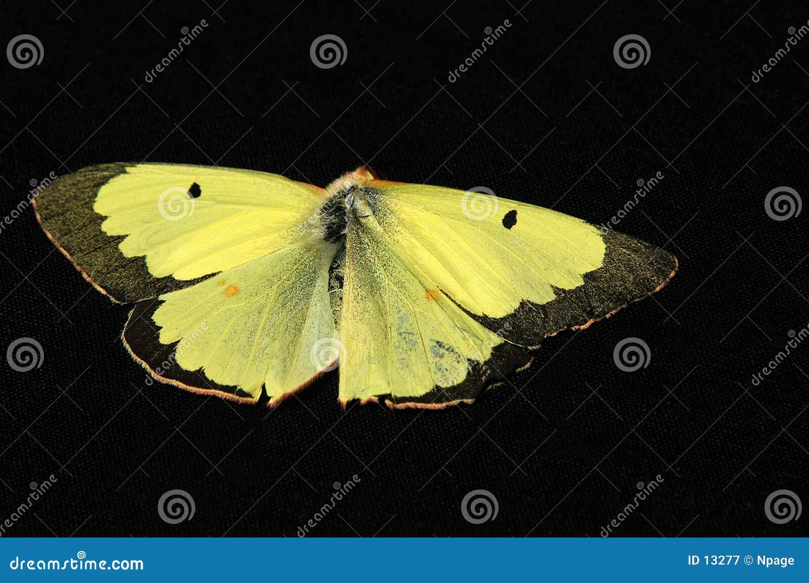 Färben Sie Flügel gelb