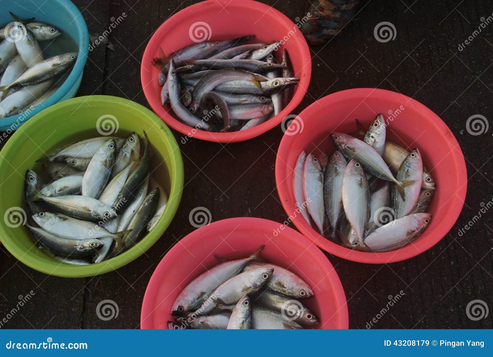 Download Färg Av Handfatet Och Fisken Fotografering för Bildbyråer - Bild av sell, naturligt: 43208179