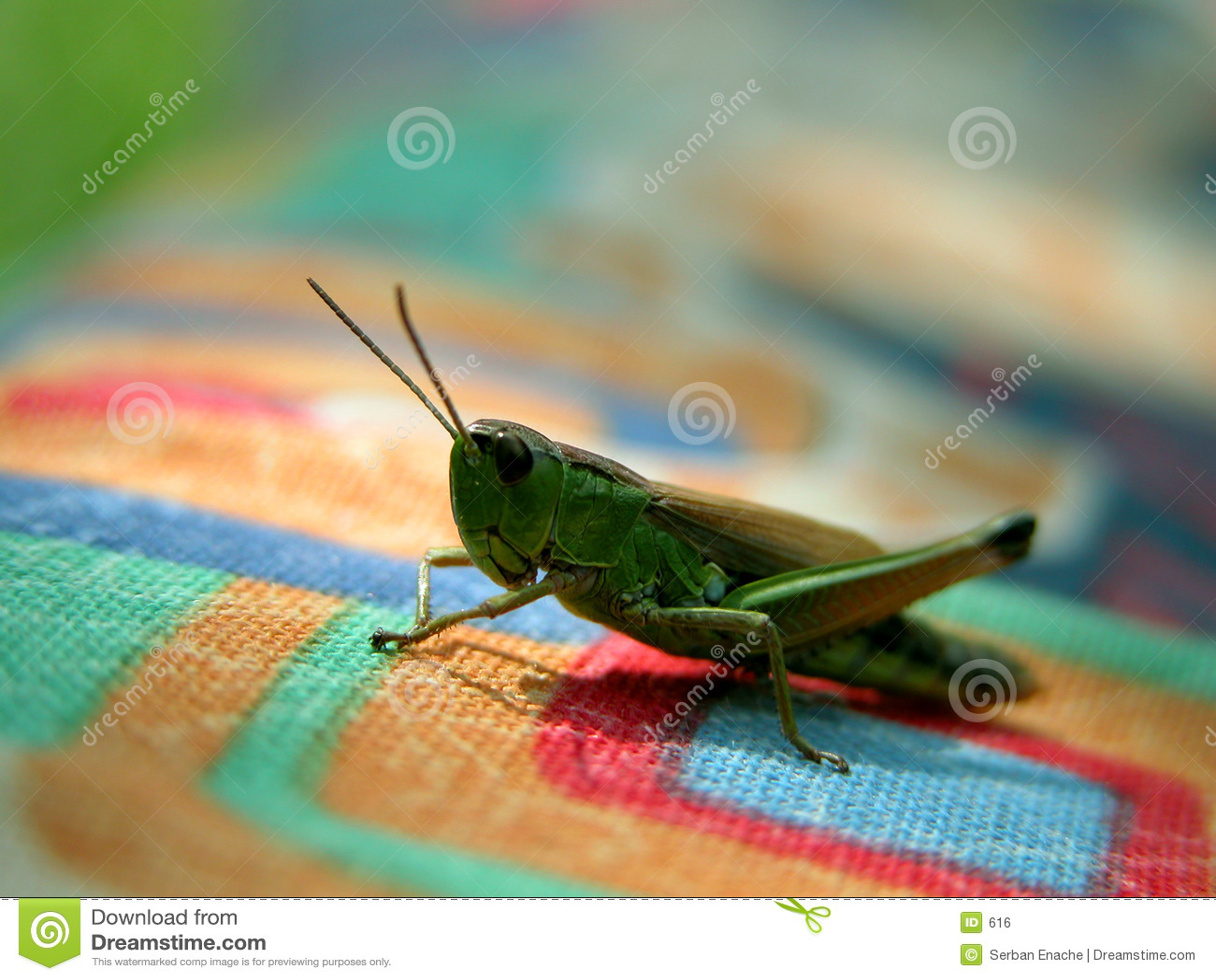 Färgad gräshoppatextur