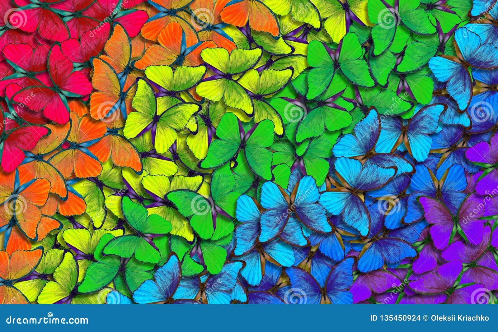 Färger av regnbågen Modell av den mångfärgade fjärilsmorphoen, texturbakgrund mångfärgad naturlig abstrakt modell