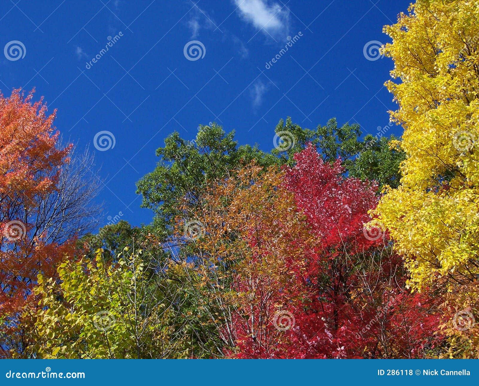 Färger faller säsongen