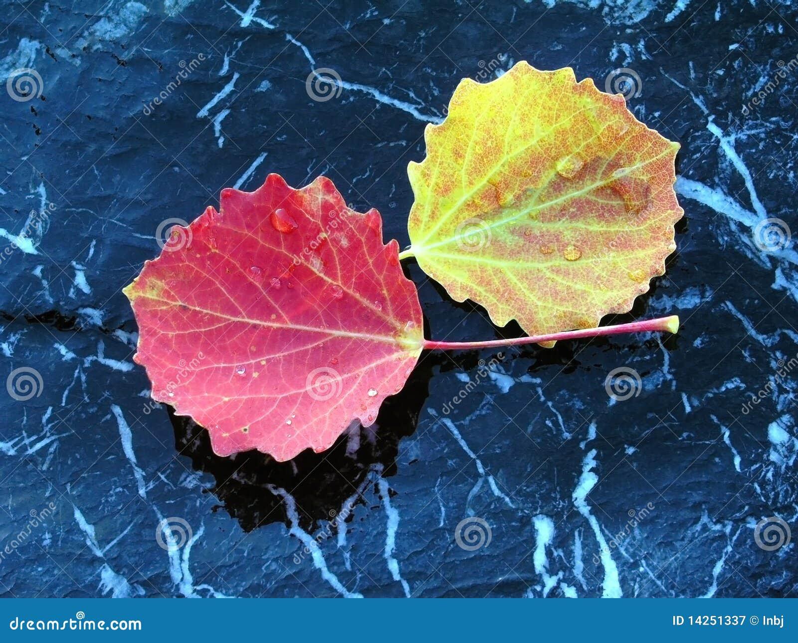 Färgglad isolerad leavessten