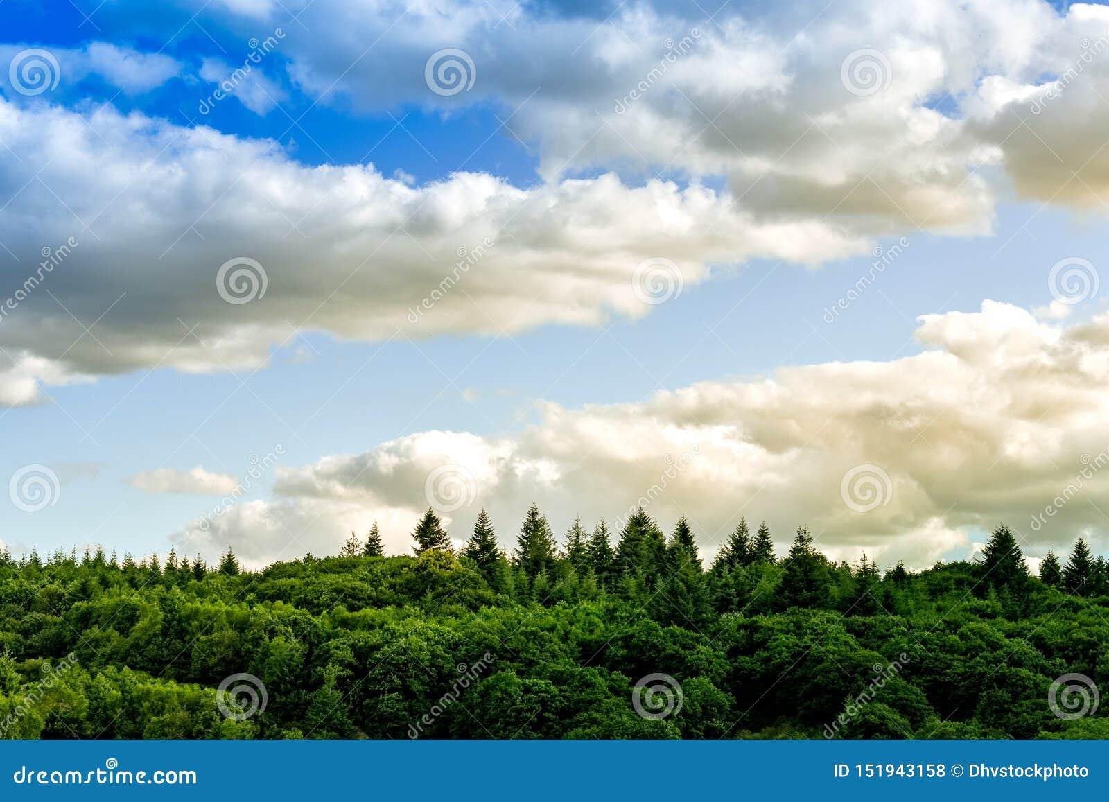 Färgglad och minsta landskapbarckground Sunsuet fördunklar och sörjer