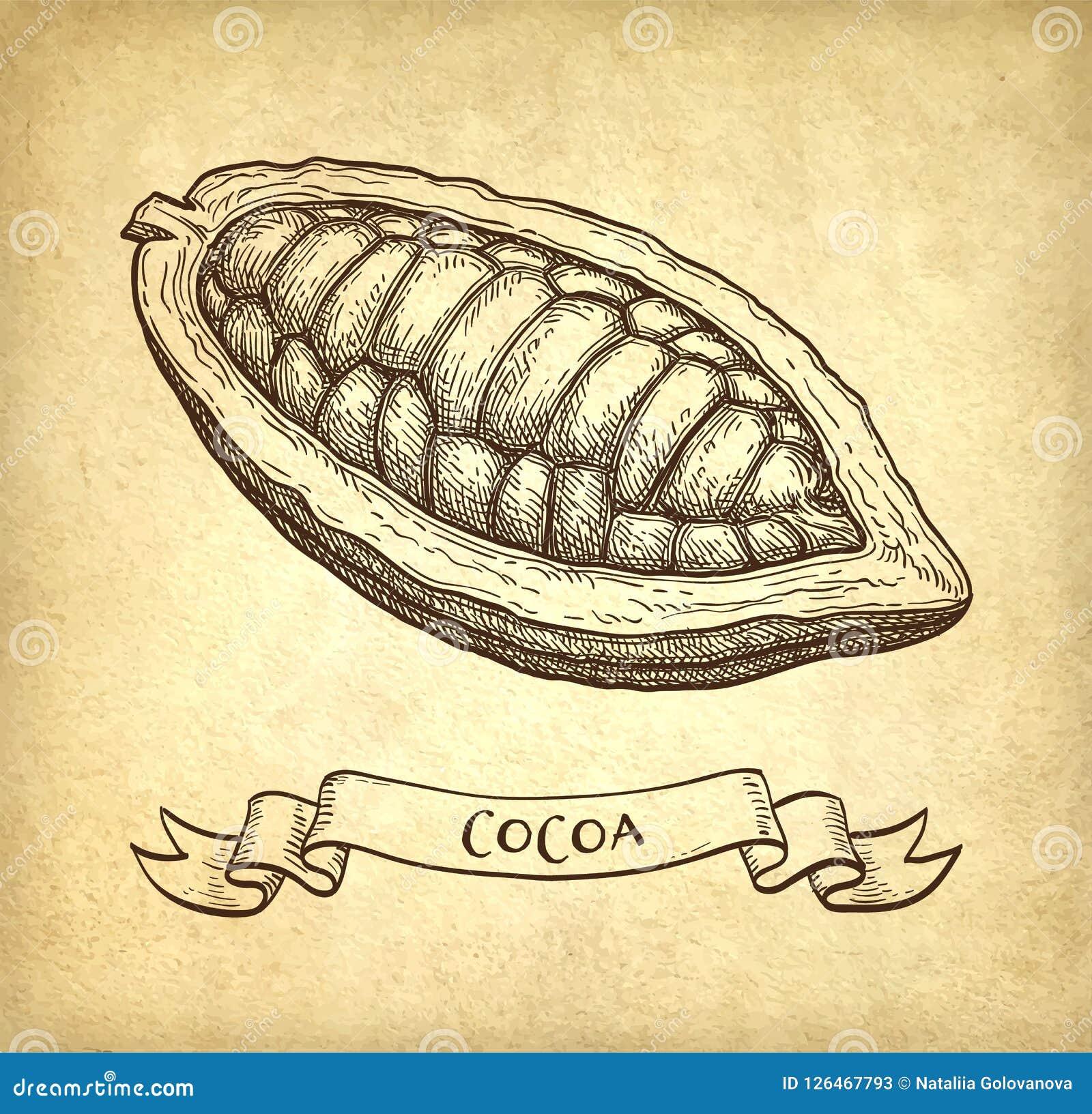 Färgpulver skissar av kakao