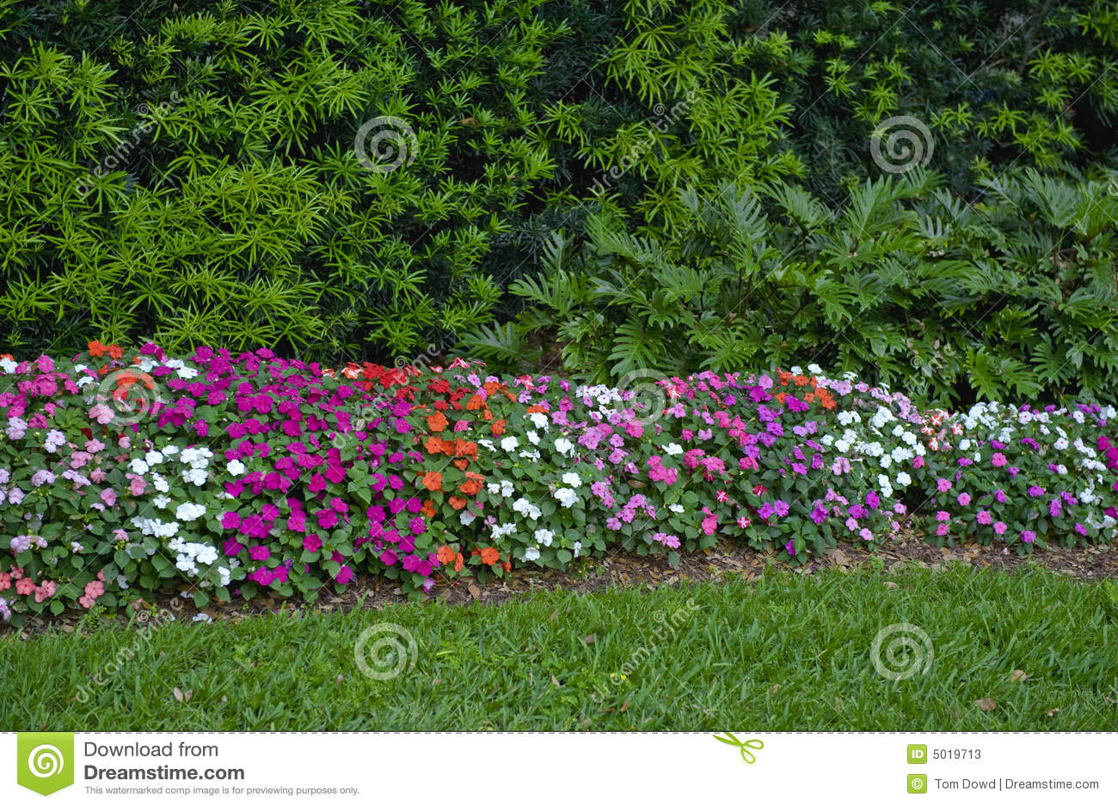 Färgrik blommahäck
