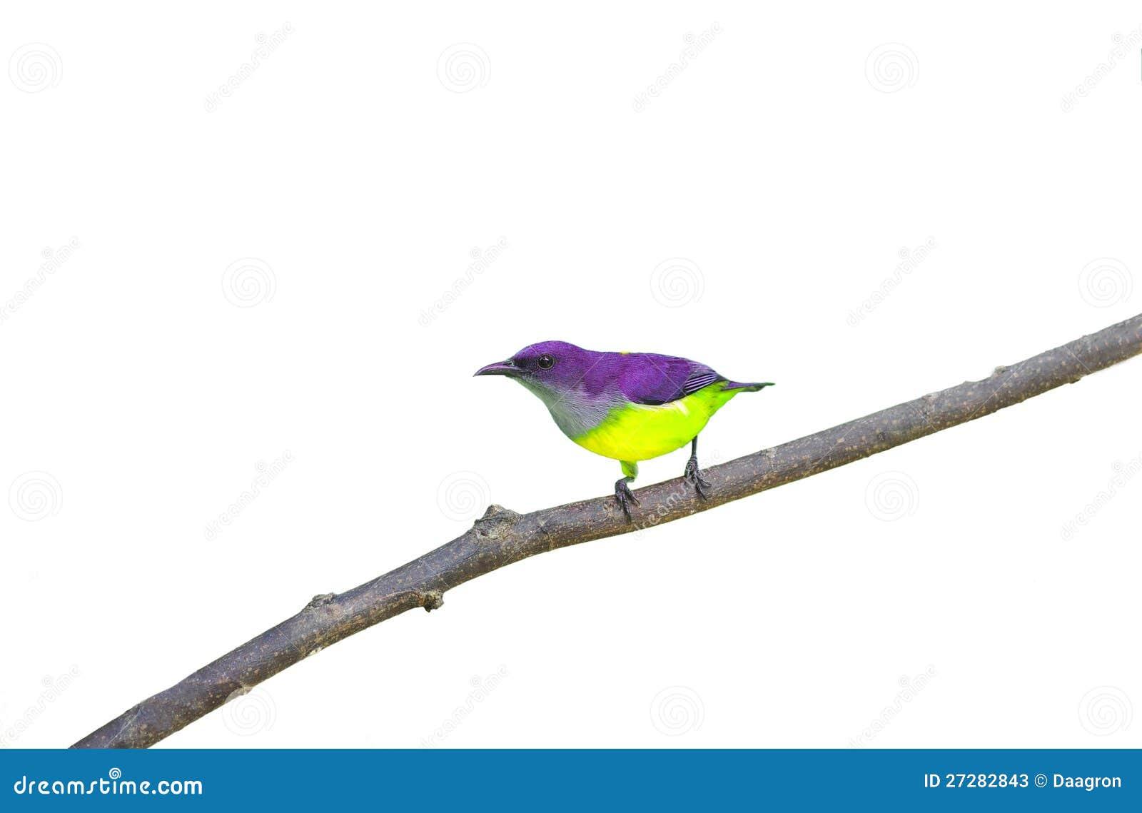 Färgrik fågel