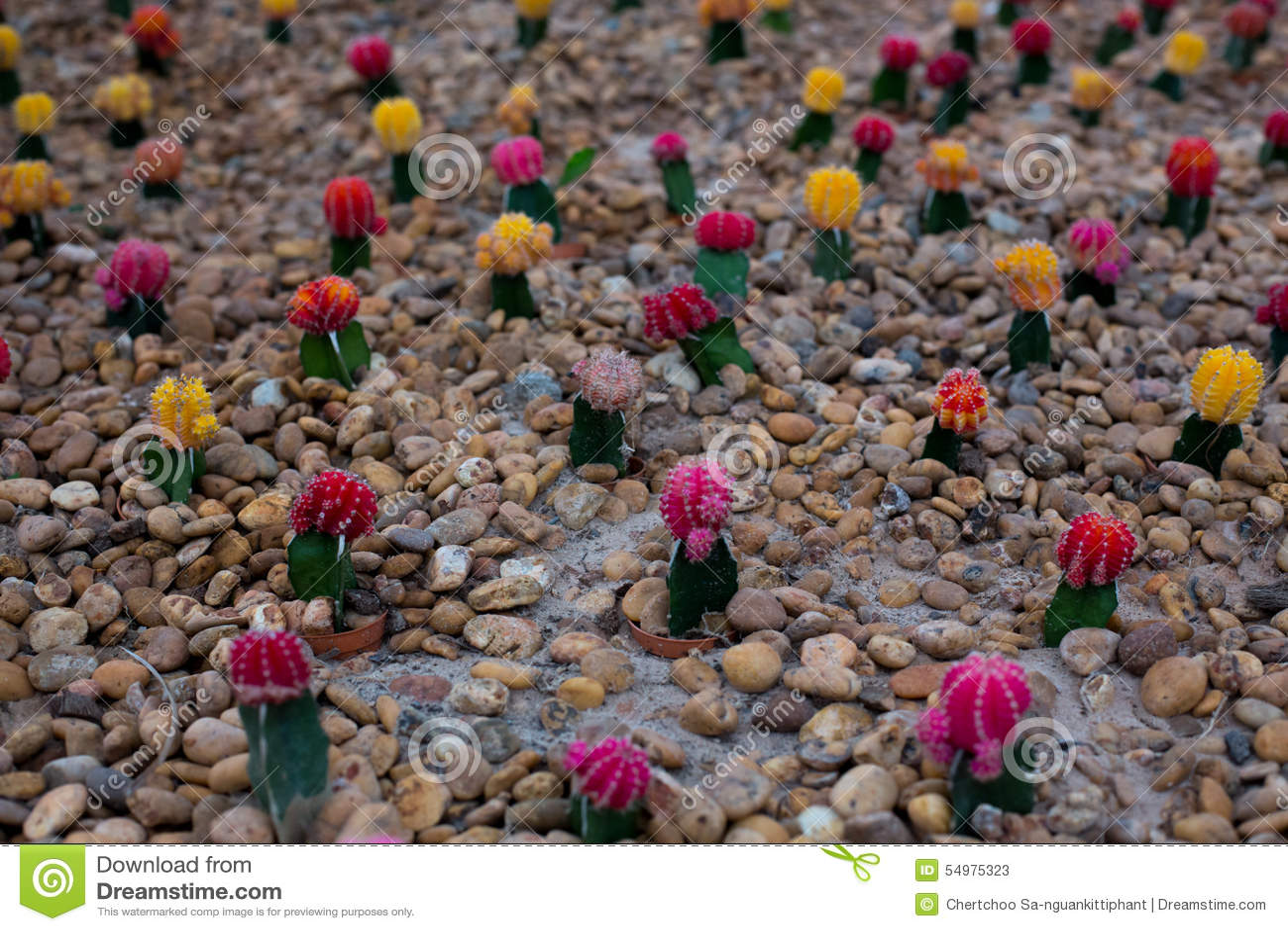 Färgrik kaktus