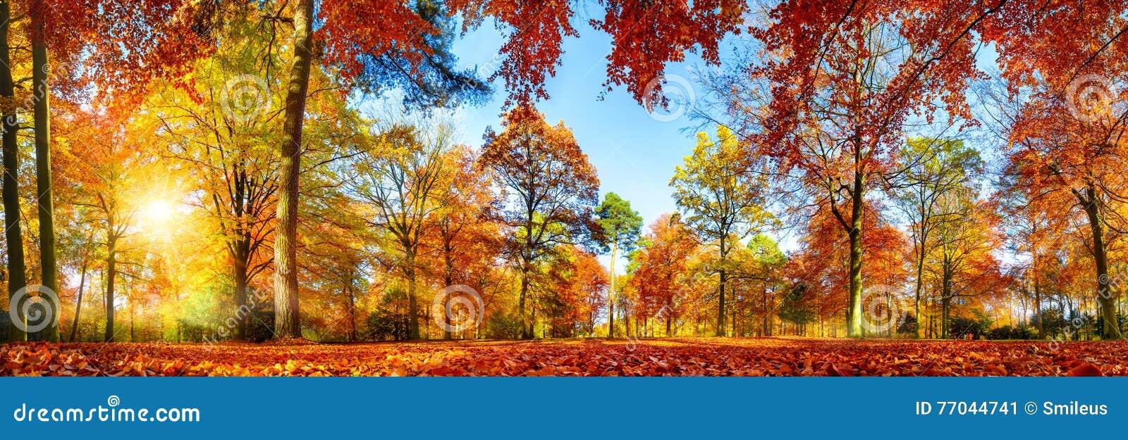 Färgrik skogpanorama i höst