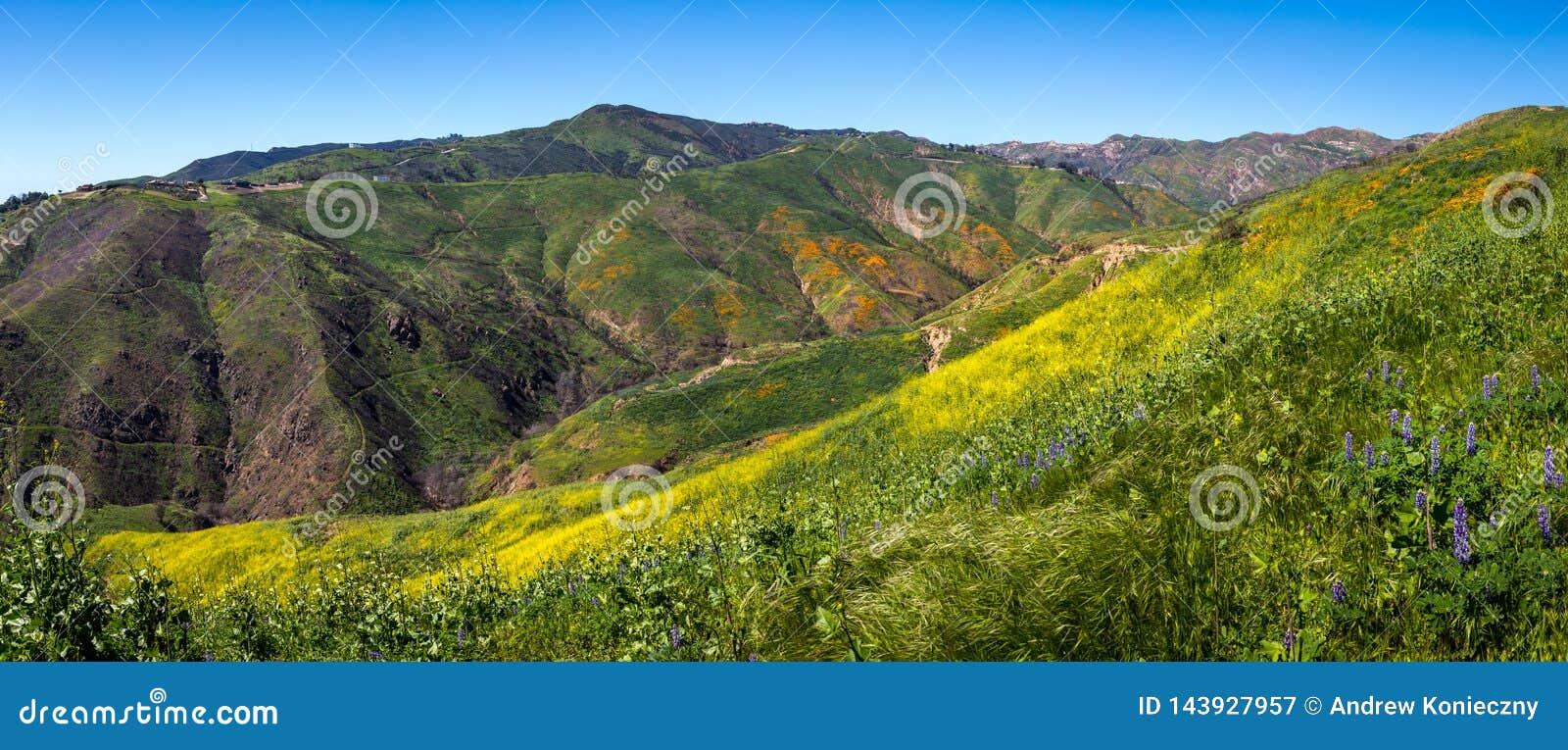 Färgrik toppen blom på fållakanjonpanorama