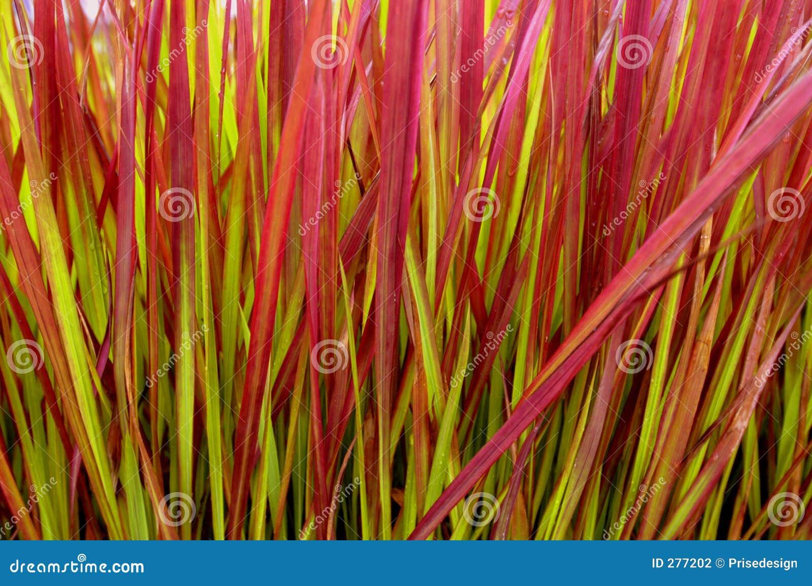 Färgrik växt för blad
