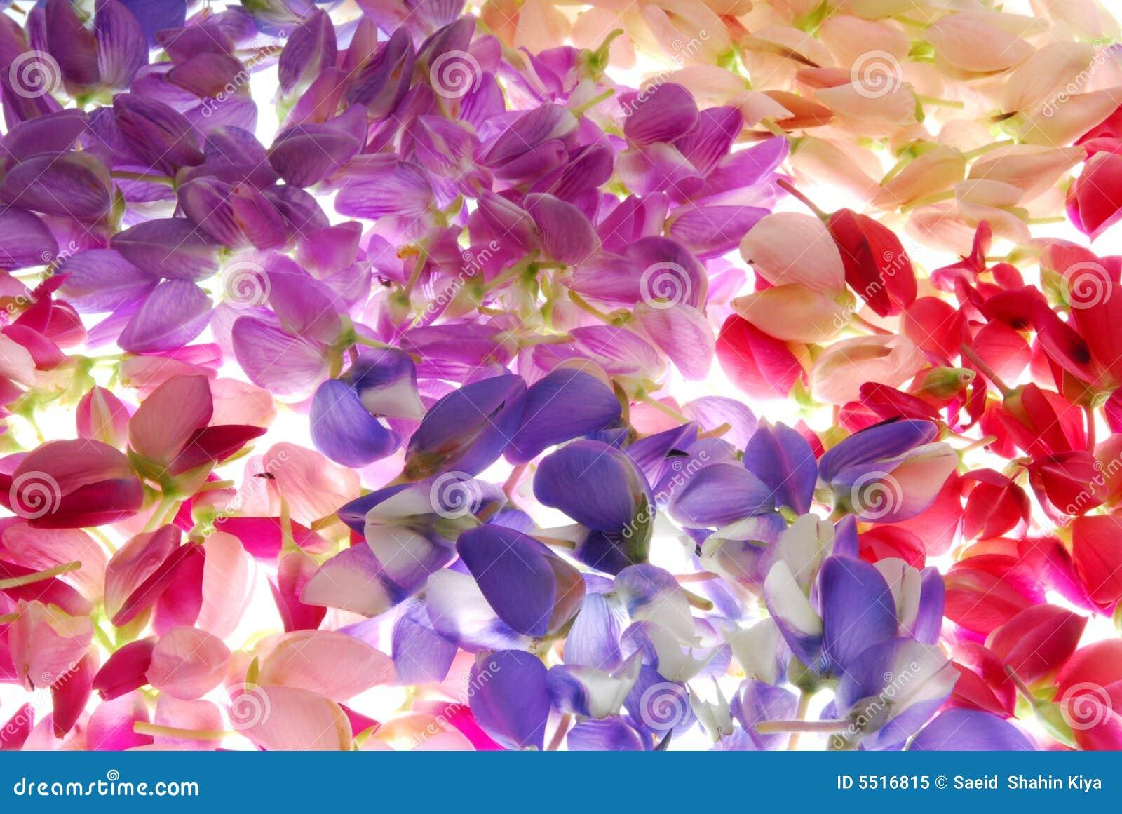 Färgrika blommapetals
